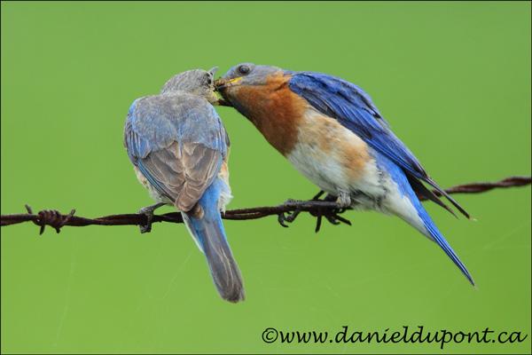 حين تتزوج العصافير عن حب تنجب أطفالا أكثر