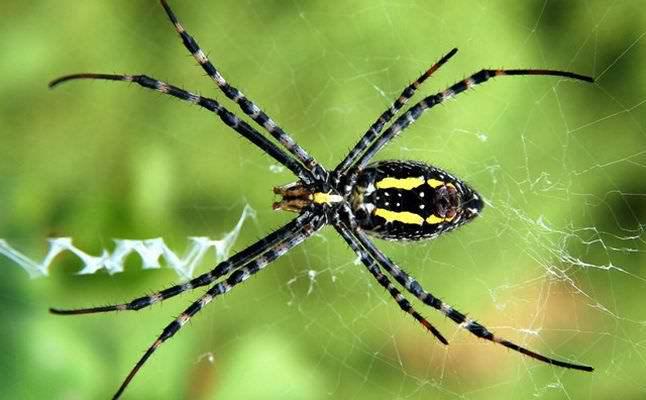 علماء أحياء : العناكب يمكنها أن تأكل كل البشر  وتقضي على العالم