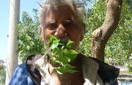 باكستاني يتغذى على أوراق الشجر منذ 25 عاما ولم يمرض ابدا