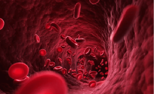 ما هي كمية الدم الموجودة فعلياً في جسم الإنسان؟