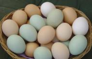 بالفيديو: هل تعرف ماذا يحدث لجسمك إذا داومت على تناول البيض يومياً؟